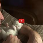 Quando il tuo gatto diventa come un figlio [VIDEO]
