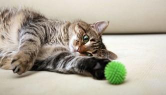 Come giocare col gatto in 10 modi diversi