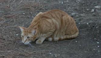 Gatto ucciso con dei petardi in bocca