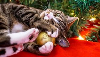 Come evitare lo stress al gatto durante le festività