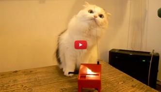 Il gatto scopre come suonare il theremin [VIDEO]