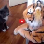 Gatto scatenato contro la tigre di pezza [VIDEO]