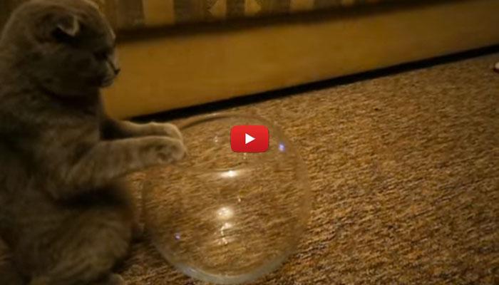 Riuscir il gatto a entrare nel vaso dei pesciolini video - Nascondigli segreti in casa ...