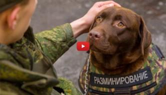 La Russia sperimenta giubbotto antiproiettile per cani [VIDEO]
