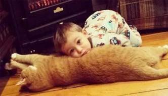 Larry, il gatto abbandonato perché troppo goloso