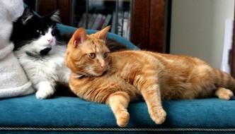 In Giappone inventato lo spray al profumo di gatto