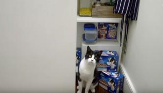 Se giochi a nascondino vinci una casa per gatti [CONCORSO]