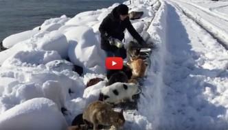 Vera, la donna che protegge dalla neve i gatti di Istanbul [VIDEO]