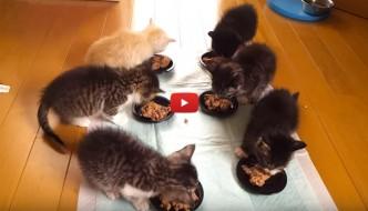 Sei bellissimi gattini pranzano insieme [VIDEO]