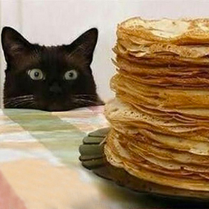 gatto banchetto