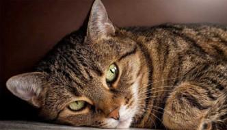 """La leggenda della """"M"""" sulla fronte dei gatti"""