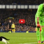 Gatto in campo sfugge al portiere tra il boato dei tifosi [VIDEO]