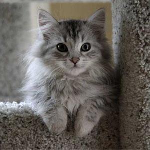 gatto pepe