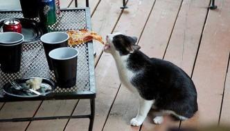 Il gatto Arsenio ruba il buffet delle forze dell'ordine