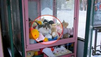 Troppo freddo, il gatto si infila nella macchina dei peluche