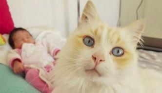 Pitocha, il gatto che non lascia mai solo il neonato di casa