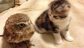 Fuku e Marimo, la bella amicizia tra un gattino e un gufetto