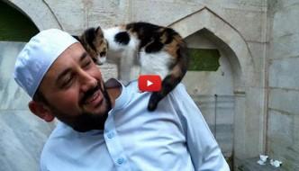 Istanbul: l'Imam apre le porte della moschea ai gatti randagi [VIDEO]