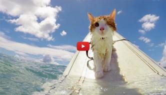 Kuli, il gatto con un solo occhio che ama il mare [VIDEO]