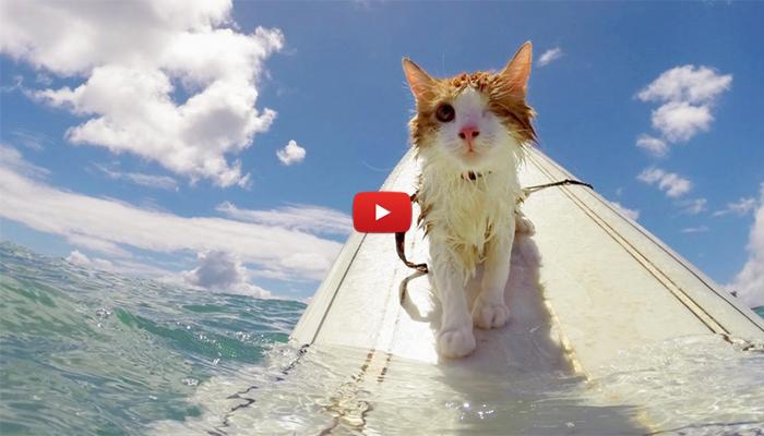Kuli Il Gatto Con Un Solo Occhio Che Ama Il Mare Video
