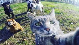 """Manny, il gatto """"boss"""" che fa selfie con i cani"""