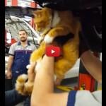 Sentono dei rumori in macchina: nel motore c'è il gatto dei vicini [VIDEO]