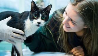 Sorpresa di Natale: il gatto Miko torna a casa dopo 7 anni!