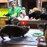 Donna condivide appartamento con 1000 gatti! [VIDEO]