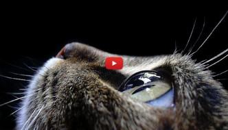 Tra 3000 anni l'uomo avrà gli occhi di gatto [VIDEO]