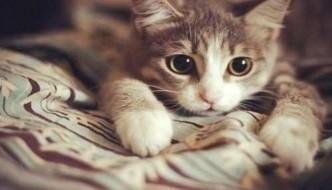 Pepe, il gatto adottato e abbandonato dopo un giorno