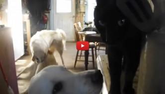 """Momento di tenerezza tra cane e gatto rovinato da una """"rissa"""" [VIDEO]"""