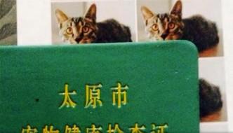 L'incredibile storia di Annibale, il gatto col doppio passaporto