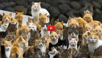 La storia di Aoshima e delle altre isole in cui i gatti sono i re [VIDEO]