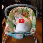 Blanquita, il gatto che si crede un neonato [VIDEO]