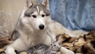 In Sardegna ambulatorio gratuito h24 per cani e gatti