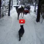 Il bellissimo incontro tra il gatto Willy e il cerbiatto [VIDEO]