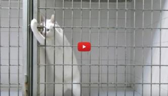 Chamallow, il gatto randagio esperto in evasione