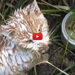 La rinascita di Charlie, la gatta gettata nella calce [VIDEO]