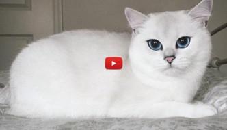 Coby the cat, il gatto con gli occhi di ghiaccio [VIDEO]