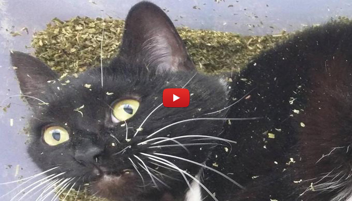 Trovato con 1 kg di erba gatta il suo sguardo fa for Erba gatta effetti