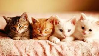Gattini venduti come esche per cani da combattimento