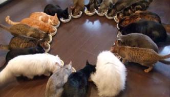 Miao-auguri: oggi è la festa del gatto!