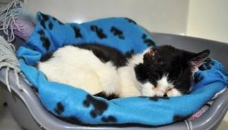 Holly, la gatta abbandonata che ha vinto la malattia