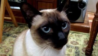 Nanà, la gatta scopre ladri in casa mentre il cane continua a dormire