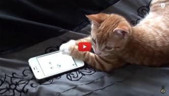 Il gattino che si diverte con le app dello smartphone [VIDEO]