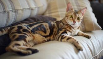 Le 10 inconfessabili cose che fa chi vive con un gatto