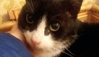 La sua umana muore, il gatto Felix resta in balcone per tre mesi
