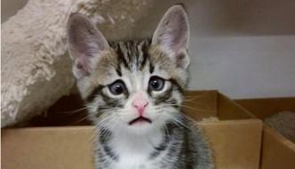 Bum, il gatto famoso per avere sempre il musetto imbronciato