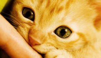 Il segreto per capire al meglio i nostri gatti