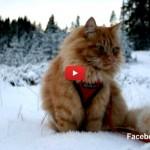 Jesper, il gatto sciatore che viene dalla Norvegia [VIDEO]